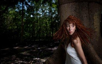 природа, дерево, девушка, рыжеволосая