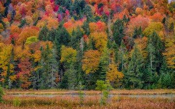 дорога, трава, деревья, лес, пейзаж, склон, осень