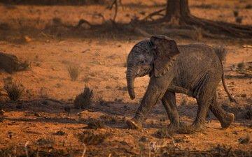 природа, слон, африка, слоненок