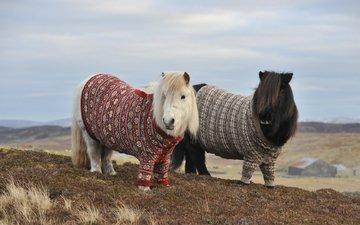 горы, холмы, осень, пара, лошади, пони, два, свитер