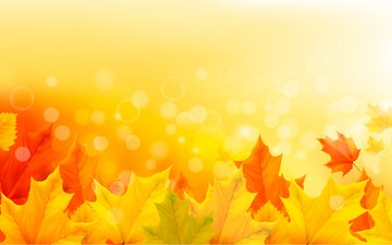 color, leaves, background, autumn