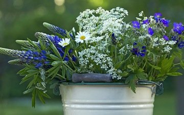 цветы, лето, полевые, ведро