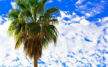 небо, облака, пальма, веерные листья