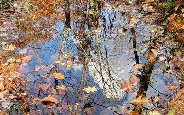 природа, листья, осень, лужа
