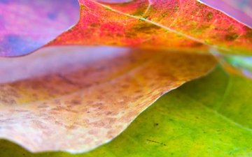 nature, wallpaper, leaves, color, sheet