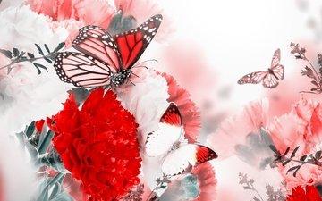 цветы, цветение, бабочки, гвоздика, цветы, blossom, веточки, butterflies, ветками