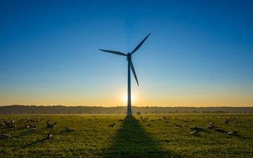 небо, утро, поле, ветряк, овцы, ветряная турбина