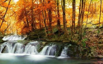 деревья, лес, листья, ручей, водопад, осень, желтые