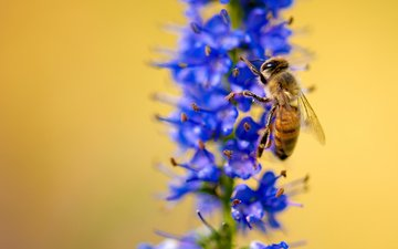macro, insect, flower, plant, bee