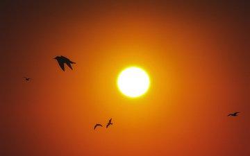 небо, закат, птицы, силуэты