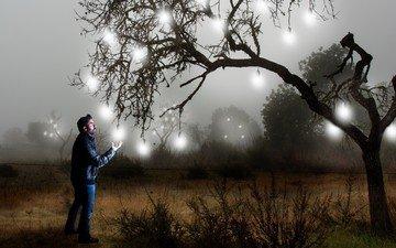 свет, дерево, человек, креатив, лампочки