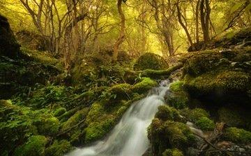 деревья, камни, лес, водопад, мох