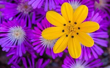 цветы, природа, макро, лепестки