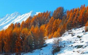 небо, деревья, горы, снег, склон, осень
