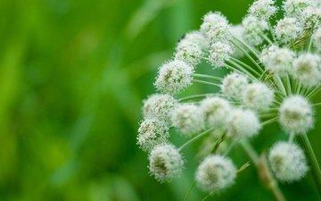 трава, природа, макро