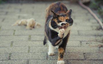 кот, лето, кошка, лапа