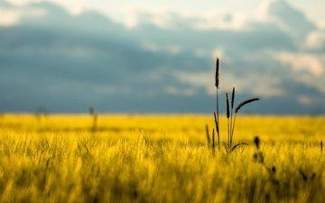 горы, природа, фон, поле, лето