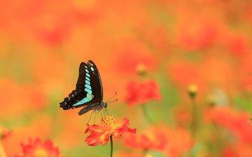 flowers, summer, butterfly
