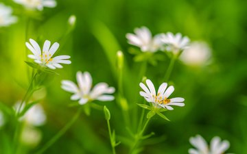 flowers, grass, petals, plant