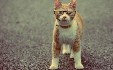 кот, очки, животное, ошейник, рыжий
