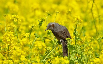 природа, цветение, лето, птица, бюль бюль