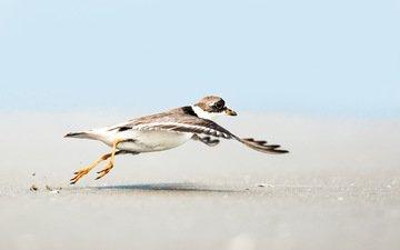 небо, полет, песок, пляж, крылья, чайка, птица