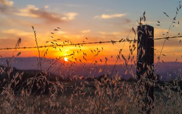 трава, облака, холмы, растения, закат, поле, горизонт, проволока, забор, силуэт, долина, оранжевое небо