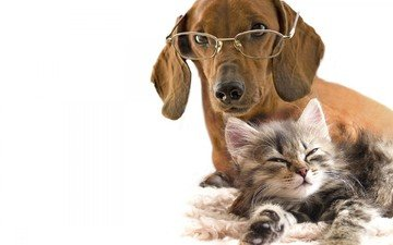 glasses, kitty, dog, love, white background, dachshund, friendship
