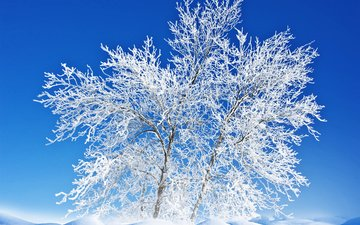 the sky, snow, nature, tree, winter, landscape, frost