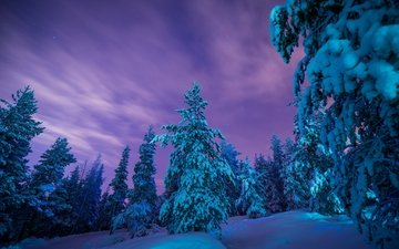 trees, snow, forest, winter, the snow, finland, lapland