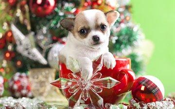 new year, decoration, muzzle, look, dog, puppy, mug, doggie, ball, snowflake, chihuahua