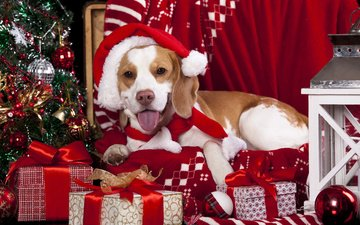 новый год, елка, подарки, собака, шарики, фонарь, плед, колпак, бигль