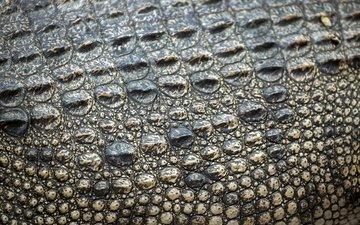 кожа, крокодил, етекстура, кожи