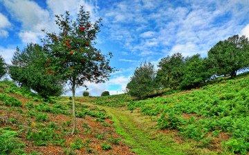 небо, деревья, пейзаж, склон, тропинка, рябина