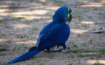 краски, птица, клюв, перья, хвост, попугай