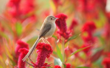 flower, summer, meadow, bird