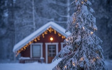 nature, new year, tree, forest, winter, house, spruce, christmas, garland, finland, lapland