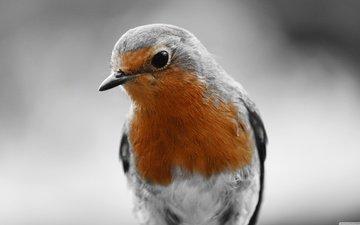 сидит, птица, птаха