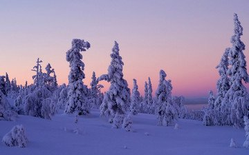 trees, snow, sunset, winter, finland, levi, lapland