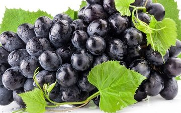 листья, синий, виноград, роса, капли, черный, зеленые, ягоды, берри, голубая, росы, гроздь, блака, raceme, листья, грин