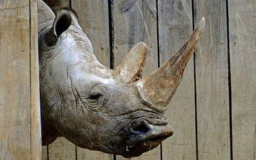 морда, фон, носорог, зоопарк