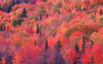 деревья, лес, склон, осень, багрянец