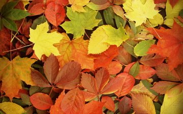 leaves, autumn, fall