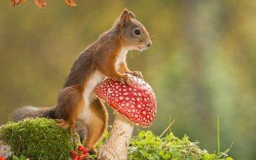 nature, mushroom, animal, protein, rodent