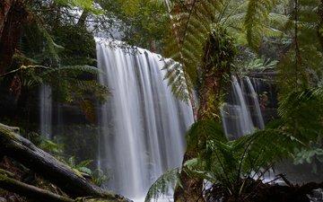 деревья, лес, водопад, поток, заросли