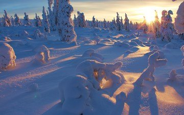 деревья, снег, закат, зима, дерево