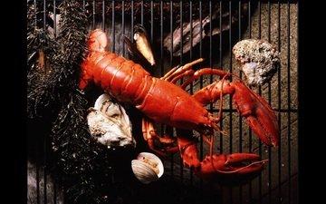 решетка, морепродукты, устрицы, лобстер