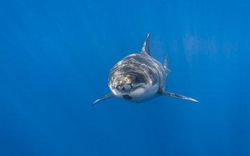 фон, море, акула, подводный мир
