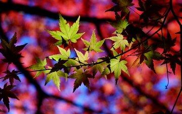 природа, листья, макро, осень, тени, веточки