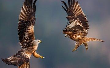 полет, птицы, перья, летны, перышки, орлы, eagles